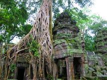 ναός της Καμπότζης prohm TA Στοκ φωτογραφία με δικαίωμα ελεύθερης χρήσης