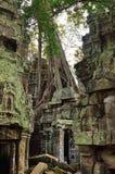 ναός της Καμπότζης prohm TA angkor wat Στοκ φωτογραφία με δικαίωμα ελεύθερης χρήσης