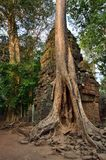 ναός της Καμπότζης prohm TA angkor wat Στοκ φωτογραφίες με δικαίωμα ελεύθερης χρήσης