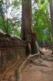 ναός της Καμπότζης prohm TA angkor wat Στοκ Εικόνα
