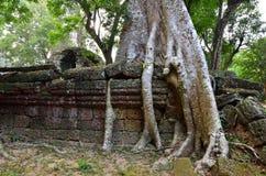 ναός της Καμπότζης prohm TA angkor wat Στοκ Φωτογραφίες