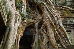 ναός της Καμπότζης prohm TA angkor wat Στοκ εικόνα με δικαίωμα ελεύθερης χρήσης
