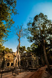 Ναός Angkor Wat TA Prohm Στοκ Φωτογραφία