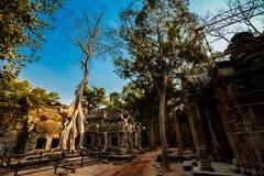 Ναός Angkor Wat TA Prohm Στοκ Εικόνες