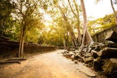 Ναός Angkor Wat TA Prohm Στοκ Εικόνα