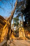 Ναός Angkor Wat TA Prohm Στοκ εικόνες με δικαίωμα ελεύθερης χρήσης