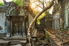 Ναός Beng Mealea, Angkor Wat, Καμπότζη Στοκ εικόνες με δικαίωμα ελεύθερης χρήσης