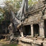 Ναός Khan Preah, Angkor Καμπότζη Στοκ εικόνες με δικαίωμα ελεύθερης χρήσης