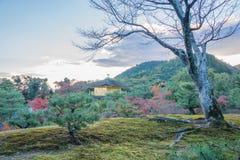 Ναός Kinkakuji το φθινόπωρο Στοκ εικόνα με δικαίωμα ελεύθερης χρήσης