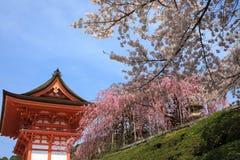 Ναός Kiyomizu και άνθος κερασιών στο Κιότο στοκ εικόνες με δικαίωμα ελεύθερης χρήσης