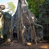 Ναός TA Phrom Angkor Στοκ Φωτογραφία