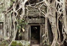 Ναός TA Prohm, ιστορικό πάρκο Angkor, Καμπότζη Στοκ εικόνες με δικαίωμα ελεύθερης χρήσης