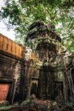Ναός TA Prohm με το γιγαντιαίο banyan δέντρο Angkor Wat, Καμπότζη Στοκ Εικόνα