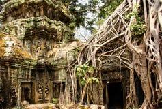 Ναός TA Prohm που καλύπτεται με τα δέντρα Banyan το angkor Καμπότζη συγκεντρώνε Στοκ Φωτογραφίες