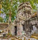 Ναός TA Prohm σε Angkor στην Καμπότζη Στοκ Φωτογραφίες