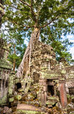 Ναός TA Prohm σε Angkor στην Καμπότζη Στοκ Φωτογραφία