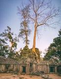 Ναός TA Prohm σε Angkor σύνθετο, Καμπότζη Στοκ Εικόνες