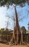 Ναός TA Prohm σε Angkor σύνθετο, Καμπότζη Στοκ φωτογραφία με δικαίωμα ελεύθερης χρήσης