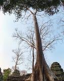 Ναός TA Prohm σε Angkor σύνθετο, Καμπότζη Στοκ φωτογραφίες με δικαίωμα ελεύθερης χρήσης