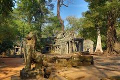 Ναός TA Prohm σε Angkor Wat, Καμπότζη Στοκ Εικόνα