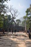 Ναός TA Prohm σε Angkor Wat σύνθετο Στοκ φωτογραφίες με δικαίωμα ελεύθερης χρήσης
