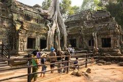 Ναός TA Prohm σε Angkor Wat σύνθετο Στοκ εικόνες με δικαίωμα ελεύθερης χρήσης