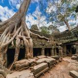 Ναός TA Prohm σε Angkor Wat. Το Siem συγκεντρώνει, Καμπότζη Στοκ εικόνα με δικαίωμα ελεύθερης χρήσης