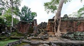 Ναός TA Prohm σε Angkor Wat Στοκ εικόνα με δικαίωμα ελεύθερης χρήσης