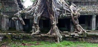 Ναός TA Prohm σε Angkor Wat Στοκ φωτογραφίες με δικαίωμα ελεύθερης χρήσης