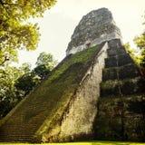 Ναός 5 Tikal Γουατεμάλα Στοκ εικόνες με δικαίωμα ελεύθερης χρήσης