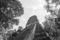 Ναός 5 Tikal Γουατεμάλα Στοκ Εικόνα