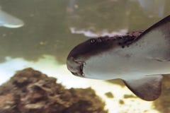 Να λάμψει κάτω στον καρχαρία φαλαινών Στοκ φωτογραφία με δικαίωμα ελεύθερης χρήσης