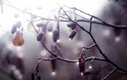 Να λάμψει πτώσεις Στοκ φωτογραφία με δικαίωμα ελεύθερης χρήσης
