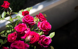 Να αιωρηθεί το λουλούδι Στοκ φωτογραφία με δικαίωμα ελεύθερης χρήσης