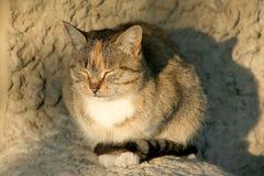 να αναβοσβήσει γάτα Στοκ Εικόνες