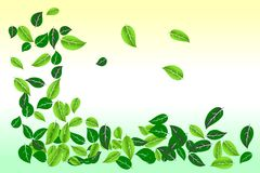 να αναπτύξει απορριμάτων συντήρησης έννοιας περιβαλλοντικό φυτό Χαλαρό πλαίσιο συνόρων φύλλων στο πράσινο και κίτρινο χρωματισμέν διανυσματική απεικόνιση