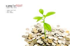 να αναπτύξει νομισμάτων πράσινο δέντρο χρημάτων Στοκ Εικόνες