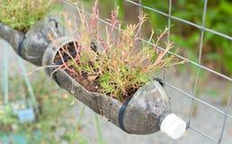 Να αναπτύξει τα λουλούδια από ένα μπουκάλι στοκ εικόνες με δικαίωμα ελεύθερης χρήσης