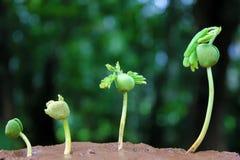 να αναπτύξει το φυτό το χώμα & Στοκ Εικόνες