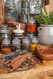 να αναπτύξει τροφίμων βασιλικού καρύκευμα συστατικών χορταριών Στοκ Εικόνες