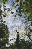 Να ανατρέξει σε ένα δάσος στοκ φωτογραφία με δικαίωμα ελεύθερης χρήσης