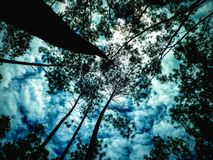 Να ανατρέξει στο δάσος πεύκων στοκ εικόνα