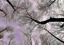 Να ανατρέξει στο Ουισκόνσιν Στοκ Φωτογραφίες