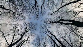 Να ανατρέξει στο χρονικό σφάλμα κλάδων και ουρανού δέντρων φιλμ μικρού μήκους