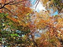 Να ανατρέξει το φθινόπωρο Στοκ φωτογραφία με δικαίωμα ελεύθερης χρήσης