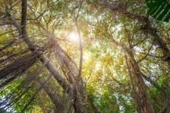 Να ανατρέξει insde ζούγκλα - δέντρα στο τροπικό δάσος Στοκ εικόνες με δικαίωμα ελεύθερης χρήσης