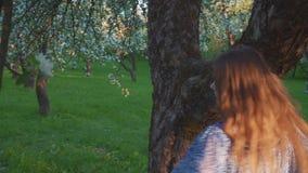 Να βάλει στον πειρασμό το νέο περπάτημα γυναικών σε έναν οπωρώνα μήλων ανθίζει την άνοιξη το λευκό r απόθεμα βίντεο