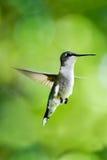 Να βουίσει ευτυχής ημέρα πουλιών Στοκ φωτογραφία με δικαίωμα ελεύθερης χρήσης