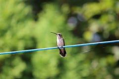 Να βουίσει κατάψυξη πουλιών στο clothline Στοκ φωτογραφία με δικαίωμα ελεύθερης χρήσης