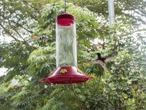 Να βουίσει μέσος-πτήση πουλιών στον τροφοδότη Στοκ Φωτογραφίες